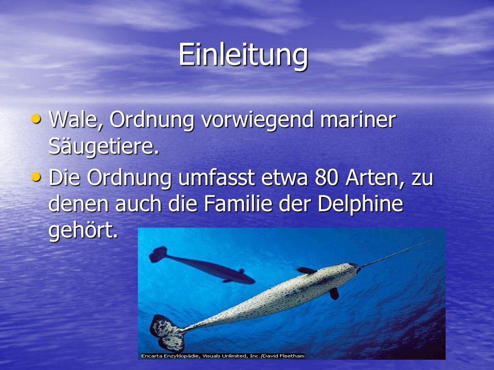 Einleitung Wale, Ordnung vorwiegend mariner Säugetiere. Wale, Ordnung vorwiegend mariner Säugetiere. Die Ordnung umfasst etwa 80 Arten, zu denen auch
