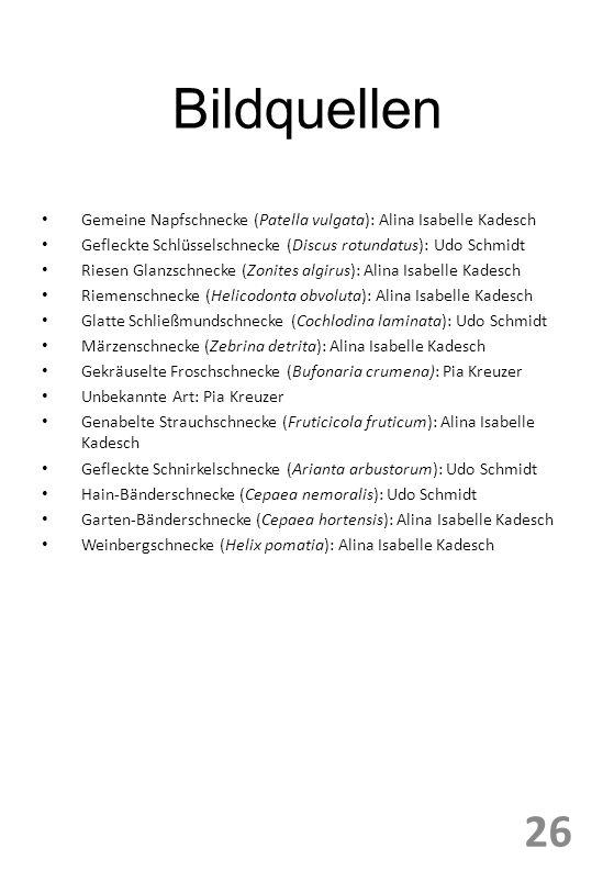 Bildquellen Gemeine Napfschnecke (Patella vulgata): Alina Isabelle Kadesch Gefleckte Schlüsselschnecke (Discus rotundatus): Udo Schmidt Riesen Glanzschnecke (Zonites algirus): Alina Isabelle Kadesch Riemenschnecke (Helicodonta obvoluta): Alina Isabelle Kadesch Glatte Schließmundschnecke (Cochlodina laminata): Udo Schmidt Märzenschnecke (Zebrina detrita): Alina Isabelle Kadesch Gekräuselte Froschschnecke (Bufonaria crumena): Pia Kreuzer Unbekannte Art: Pia Kreuzer Genabelte Strauchschnecke (Fruticicola fruticum): Alina Isabelle Kadesch Gefleckte Schnirkelschnecke (Arianta arbustorum): Udo Schmidt Hain-Bänderschnecke (Cepaea nemoralis): Udo Schmidt Garten-Bänderschnecke (Cepaea hortensis): Alina Isabelle Kadesch Weinbergschnecke (Helix pomatia): Alina Isabelle Kadesch 26