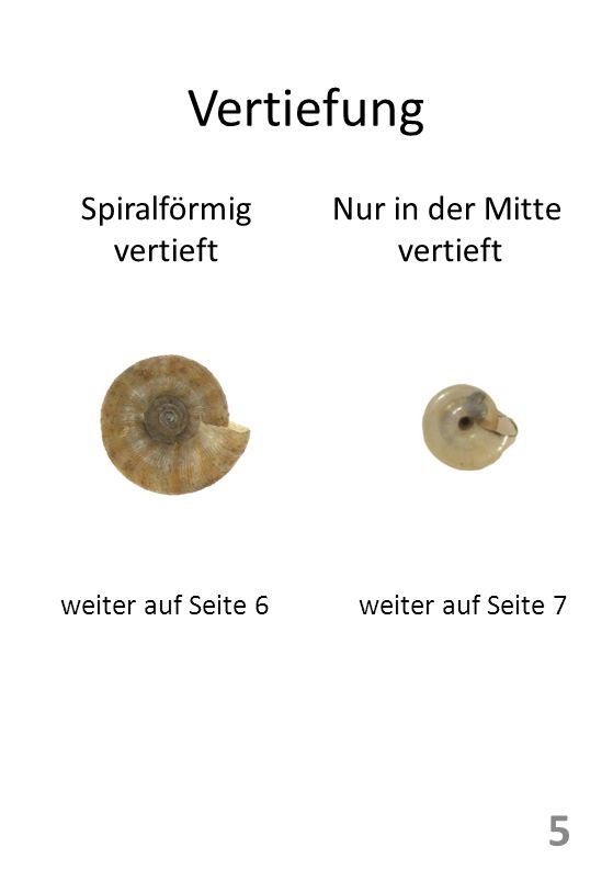 Vertiefung Spiralförmig vertieft Nur in der Mitte vertieft 5 weiter auf Seite 6weiter auf Seite 7