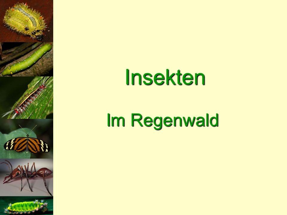 Insekten Im Regenwald