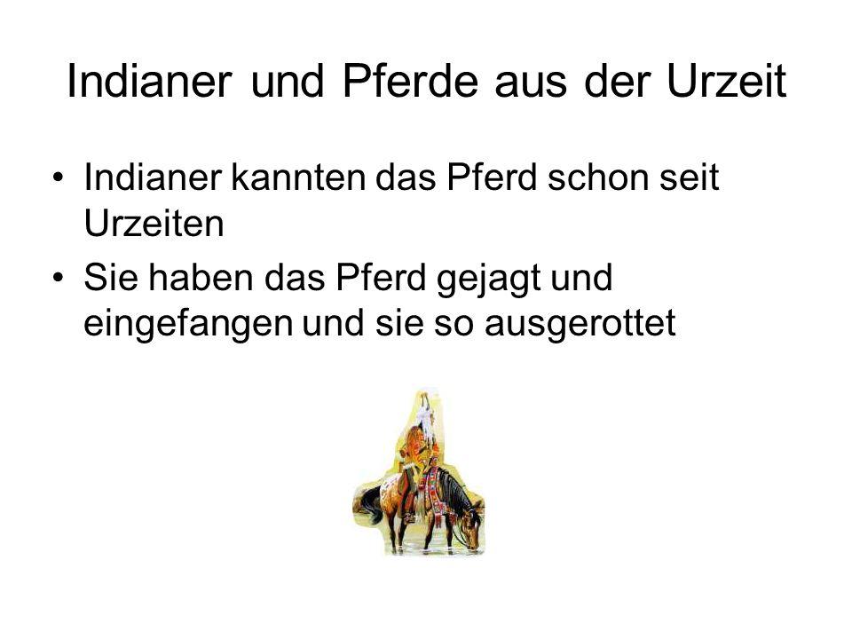 Indianer und Pferde aus der Urzeit Indianer kannten das Pferd schon seit Urzeiten Sie haben das Pferd gejagt und eingefangen und sie so ausgerottet