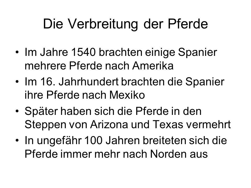 Die Verbreitung der Pferde Im Jahre 1540 brachten einige Spanier mehrere Pferde nach Amerika Im 16.