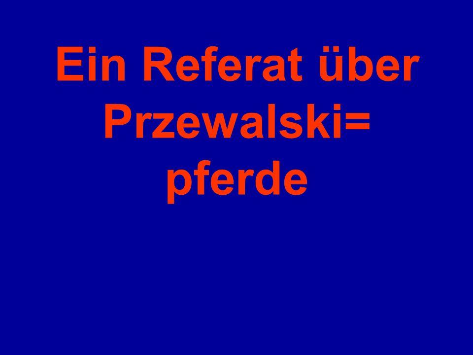 Ein Referat über Przewalski= pferde