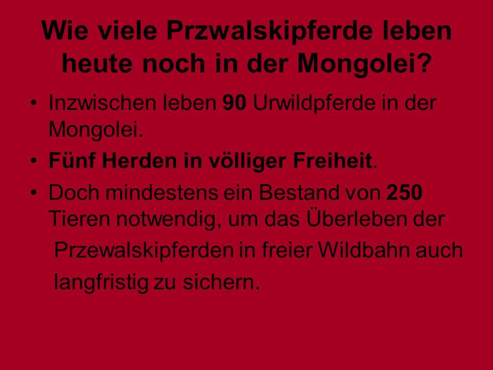 Wie viele Przwalskipferde leben heute noch in der Mongolei? Inzwischen leben 90 Urwildpferde in der Mongolei. Fünf Herden in völliger Freiheit. Doch m