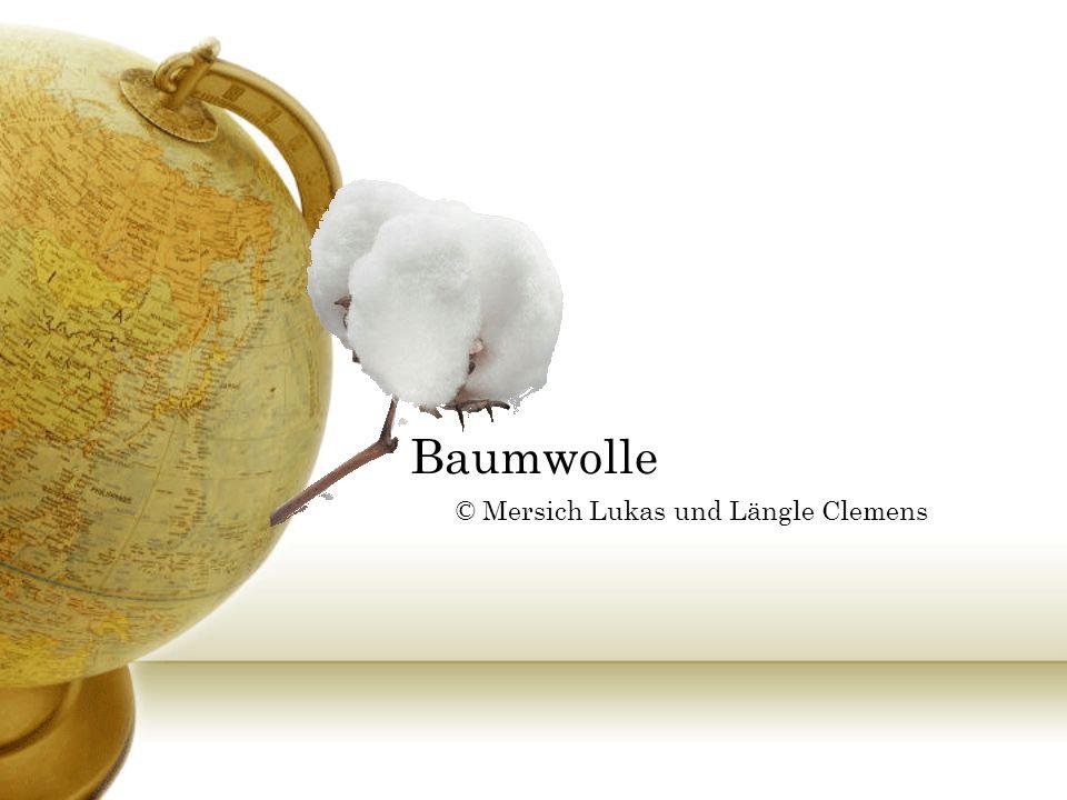 Definition von Baumwolle Hauptsächlich: Tropen & Subtropen angebaut 200 Mio Menschen sind Baumwollabhängig Über 80 Länder bauen Baumwolle an.