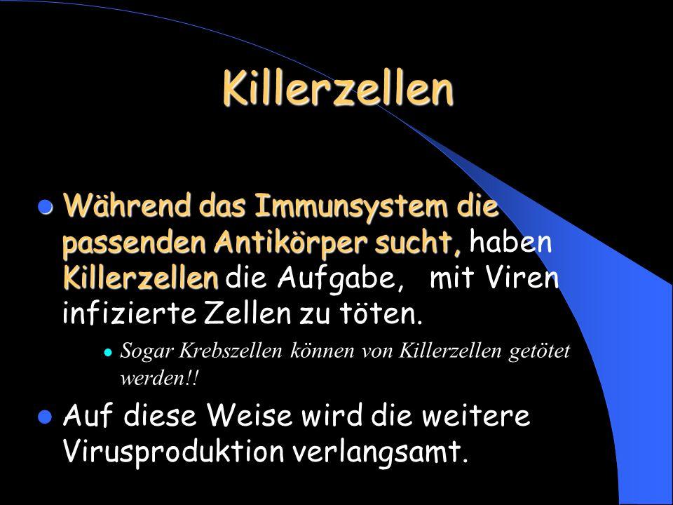 Killerzellen Während das Immunsystem die passenden Antikörper sucht, Killerzellen Während das Immunsystem die passenden Antikörper sucht, haben Killerzellen die Aufgabe, mit Viren infizierte Zellen zu töten.