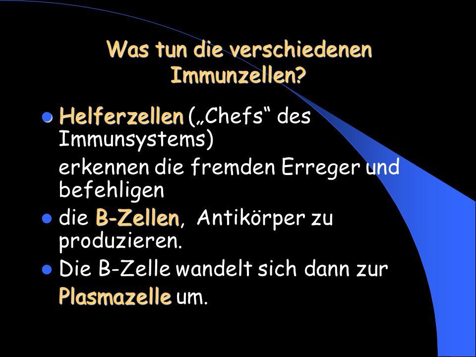 """Was tun die verschiedenen Immunzellen? Helferzellen Helferzellen (""""Chefs"""" des Immunsystems) erkennen die fremden Erreger und befehligen B-Zellen die B"""