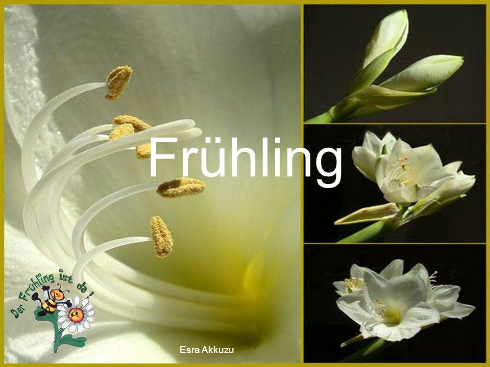 Esra Akkuzu Frühling