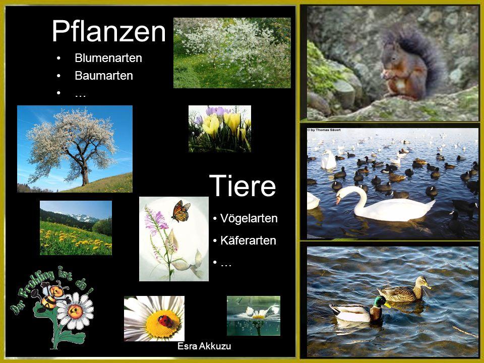 Tiere Vögelarten Käferarten … Blumenarten Baumarten … Pflanzen