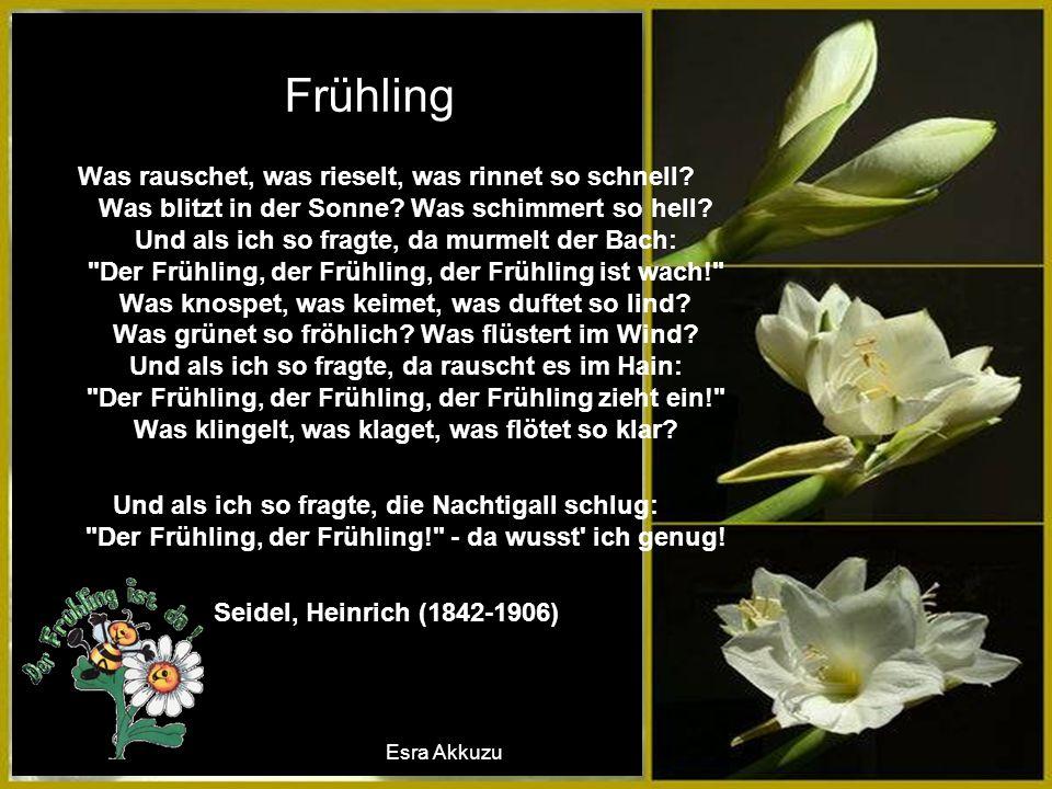 Frühling Was rauschet, was rieselt, was rinnet so schnell.