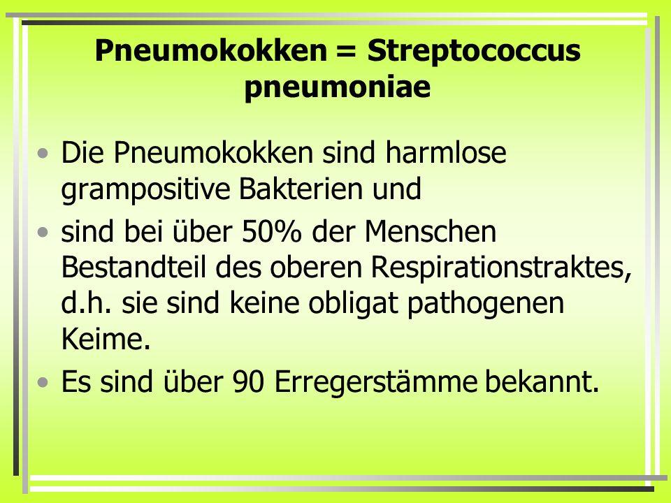 Pneumokokken = Streptococcus pneumoniae Die Pneumokokken sind harmlose grampositive Bakterien und sind bei über 50% der Menschen Bestandteil des obere