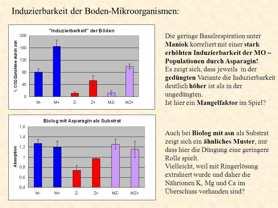 Die geringe Basalrespiration unter Maniok korreliert mit einer stark erhöhten Induzierbarkeit der MO – Populationen durch Asparagin! Es zeigt sich, da