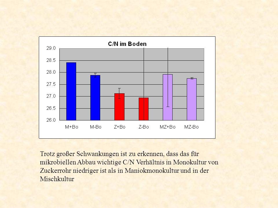 Trotz großer Schwankungen ist zu erkennen, dass das für mikrobiellen Abbau wichtige C/N Verhältnis in Monokultur von Zuckerrohr niedriger ist als in M