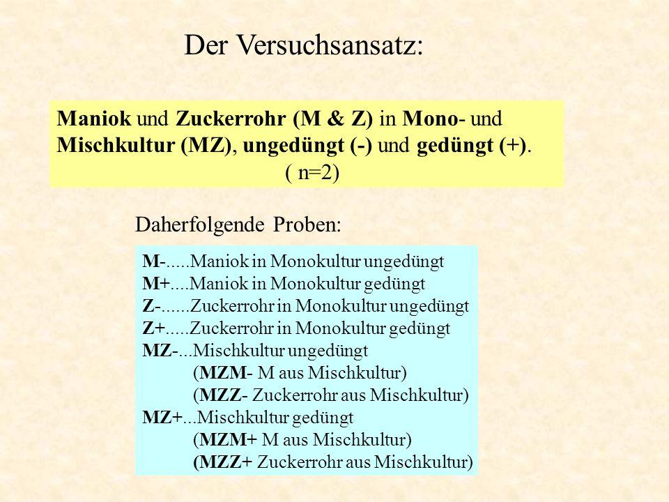 Der Versuchsansatz: M-.....Maniok in Monokultur ungedüngt M+....Maniok in Monokultur gedüngt Z-......Zuckerrohr in Monokultur ungedüngt Z+.....Zuckerr