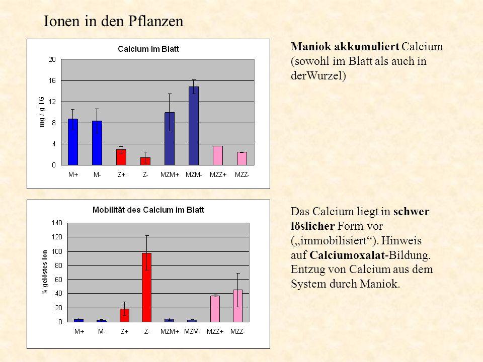 """Ionen in den Pflanzen Maniok akkumuliert Calcium (sowohl im Blatt als auch in derWurzel) Das Calcium liegt in schwer löslicher Form vor (""""immobilisier"""