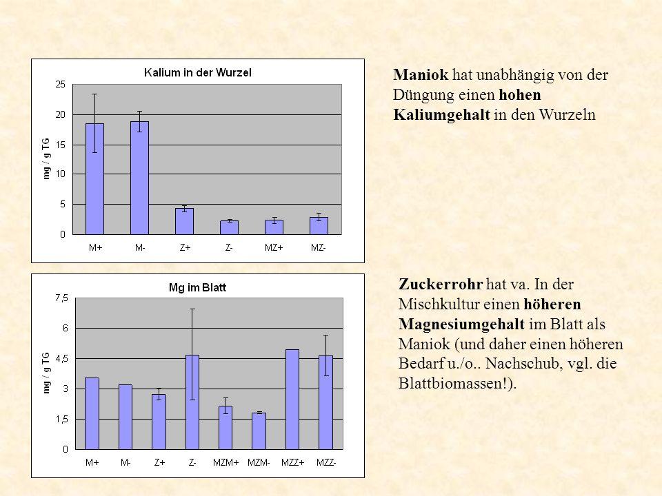 Maniok hat unabhängig von der Düngung einen hohen Kaliumgehalt in den Wurzeln Zuckerrohr hat va. In der Mischkultur einen höheren Magnesiumgehalt im B