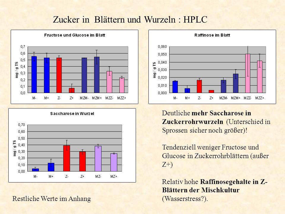 Zucker in Blättern und Wurzeln : HPLC Deutliche mehr Saccharose in Zuckerrohrwurzeln (Unterschied in Sprossen sicher noch größer)! Tendenziell weniger