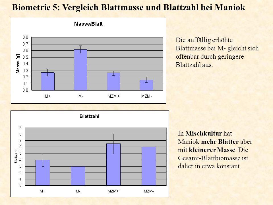 Biometrie 5: Vergleich Blattmasse und Blattzahl bei Maniok Die auffällig erhöhte Blattmasse bei M- gleicht sich offenbar durch geringere Blattzahl aus