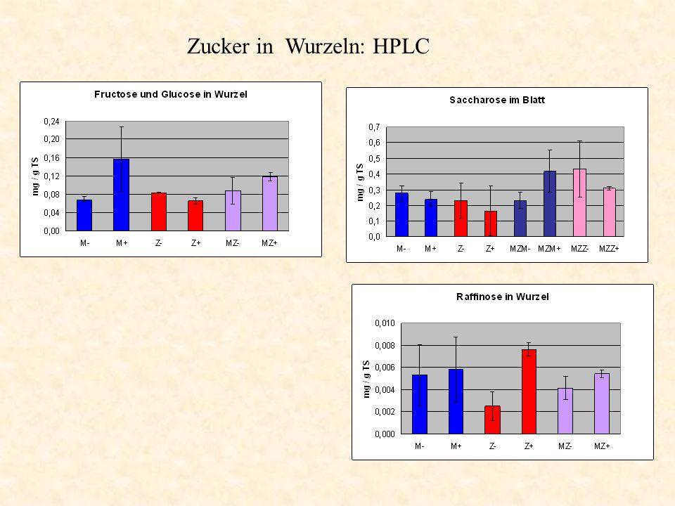 Zucker in Wurzeln: HPLC