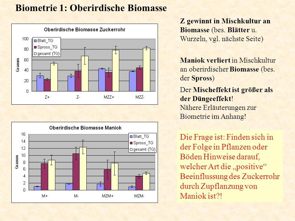 Biometrie 1: Oberirdische Biomasse Maniok verliert in Mischkultur an oberirdischer Biomasse (bes. der Spross) Z gewinnt in Mischkultur an Biomasse (be