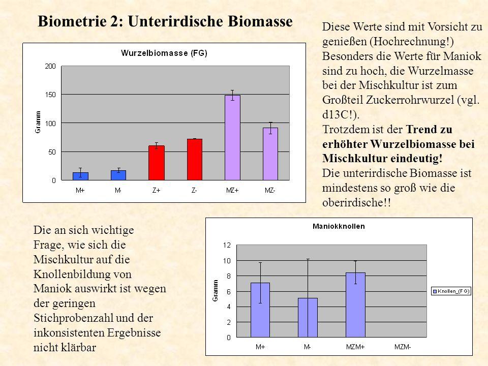Zucker in Blättern und Wurzeln : HPLC Deutliche mehr Saccharose in Zuckerrohrwurzeln (Unterschied in Sprossen sicher noch größer).