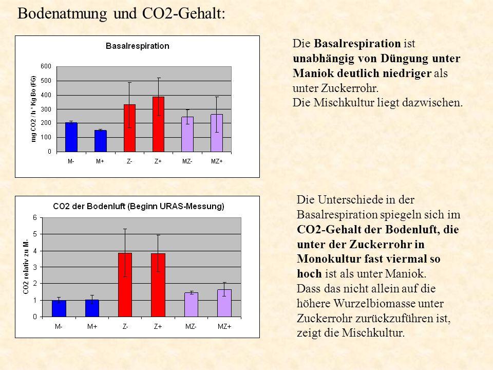 Die Basalrespiration ist unabhängig von Düngung unter Maniok deutlich niedriger als unter Zuckerrohr. Die Mischkultur liegt dazwischen. Die Unterschie
