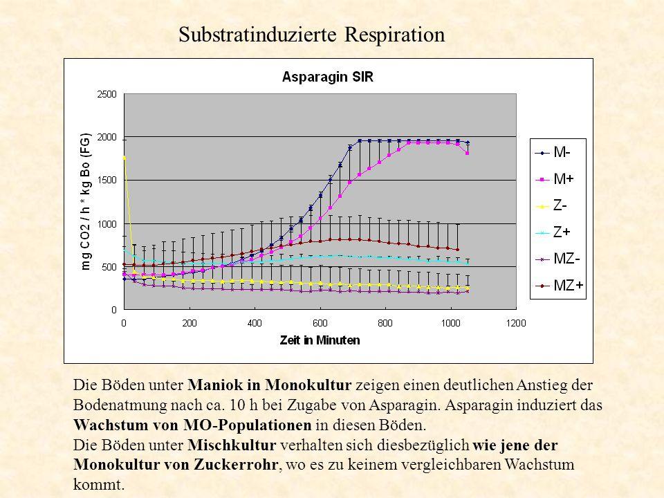 Substratinduzierte Respiration Die Böden unter Maniok in Monokultur zeigen einen deutlichen Anstieg der Bodenatmung nach ca. 10 h bei Zugabe von Aspar