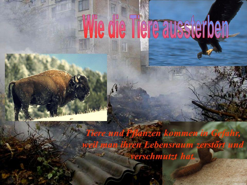 Tiere und Pflanzen kommen in Gefahr, weil man ihren Lebensraum zerstőrt und verschmutzt hat.