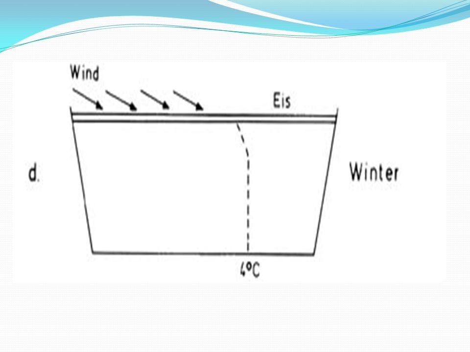 Jahresverlauf Frühjahrszirkulation/ Herbstzirkulation: Durchmischung der Stoffkonzentrationen im See durch Wind Sommerstagnation: Schichtung der Wassers: Epilimnion, Metalimnion, Hypolimnion Winterstagnation: See ist mit Eis bedeckt, keine/kaum Photosynthese