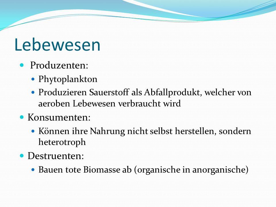 Lebewesen Produzenten: Phytoplankton Produzieren Sauerstoff als Abfallprodukt, welcher von aeroben Lebewesen verbraucht wird Konsumenten: Können ihre Nahrung nicht selbst herstellen, sondern heterotroph Destruenten: Bauen tote Biomasse ab (organische in anorganische)