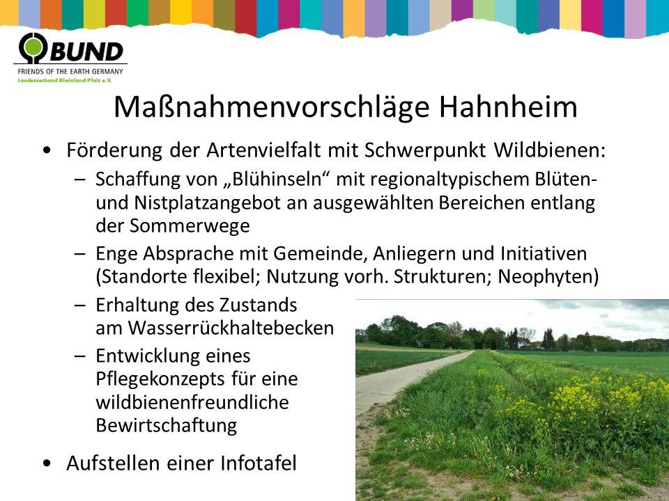 """Maßnahmenvorschläge Hahnheim Förderung der Artenvielfalt mit Schwerpunkt Wildbienen: –Schaffung von """"Blühinseln"""" mit regionaltypischem Blüten- und Nis"""