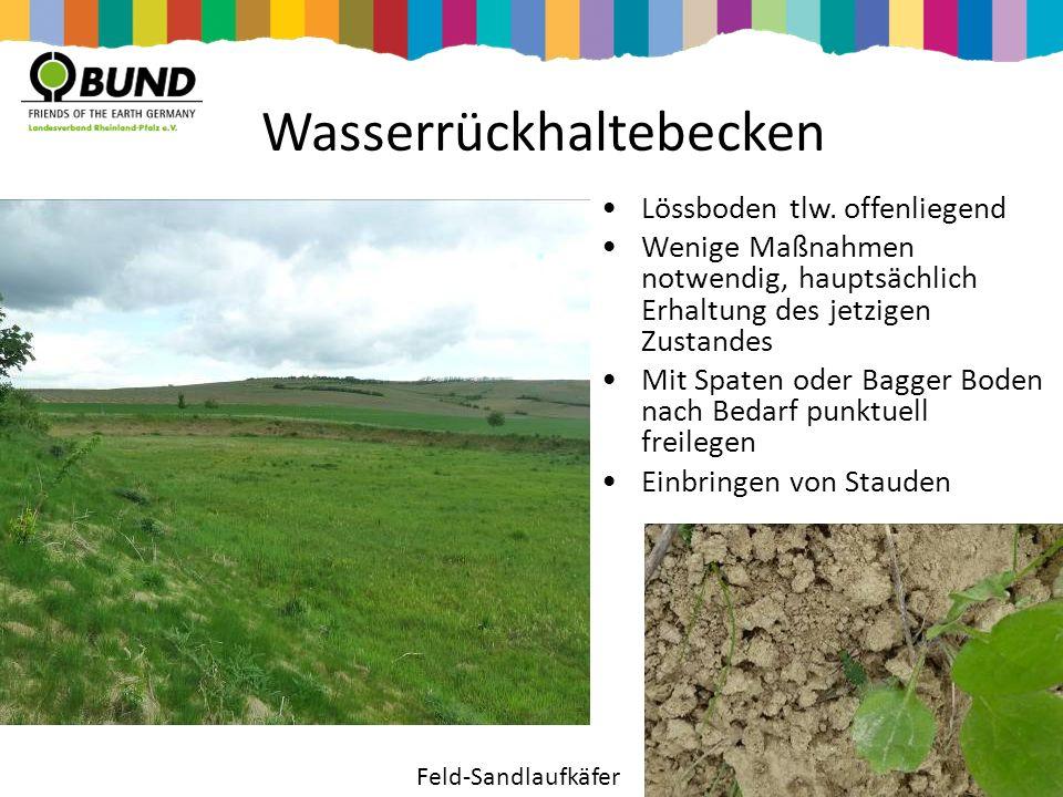 Wasserrückhaltebecken Lössboden tlw. offenliegend Wenige Maßnahmen notwendig, hauptsächlich Erhaltung des jetzigen Zustandes Mit Spaten oder Bagger Bo