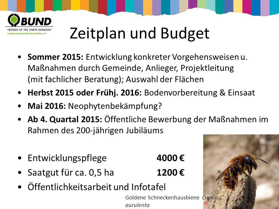Zeitplan und Budget Sommer 2015: Entwicklung konkreter Vorgehensweisen u. Maßnahmen durch Gemeinde, Anlieger, Projektleitung (mit fachlicher Beratung)