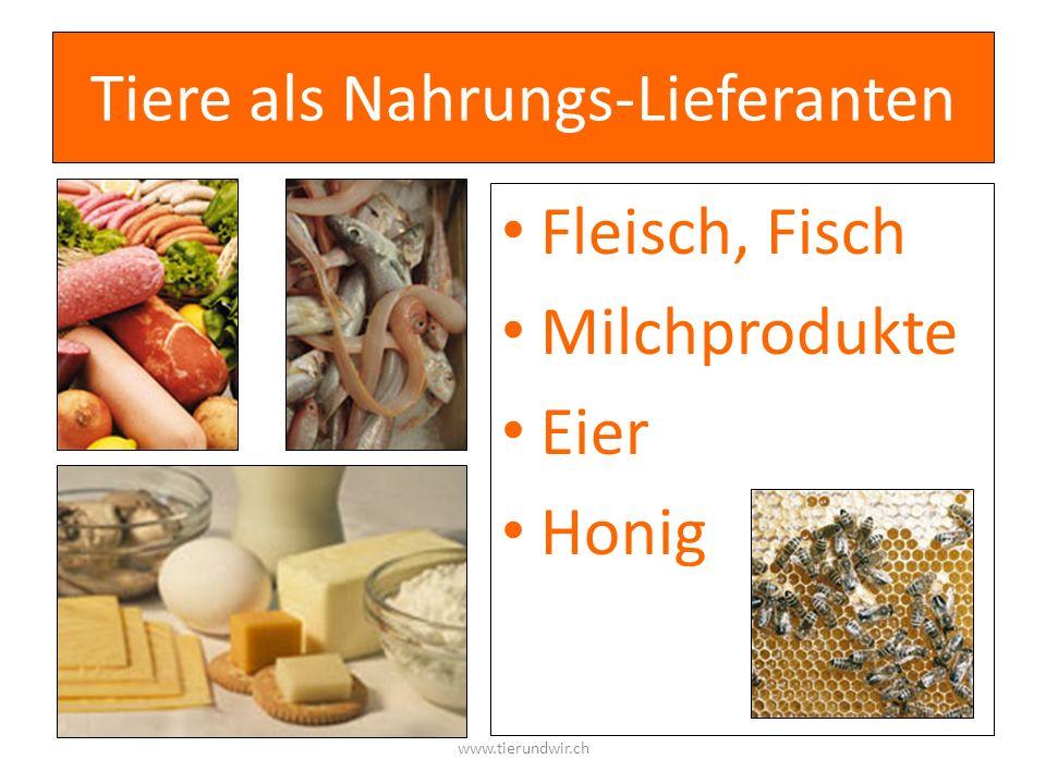 Tiere als Nahrungs-Lieferanten Fleisch, Fisch Milchprodukte Eier Honig www.tierundwir.ch