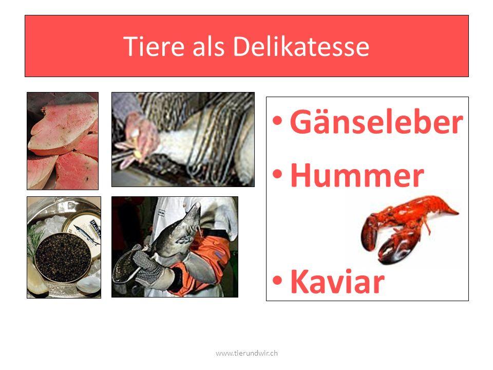 Tiere als Delikatesse Gänseleber Hummer Kaviar www.tierundwir.ch