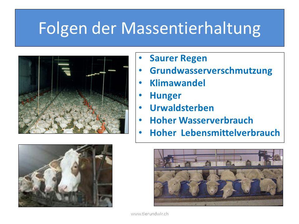 Folgen der Massentierhaltung Saurer Regen Grundwasserverschmutzung Klimawandel Hunger Urwaldsterben Hoher Wasserverbrauch Hoher Lebensmittelverbrauch www.tierundwir.ch