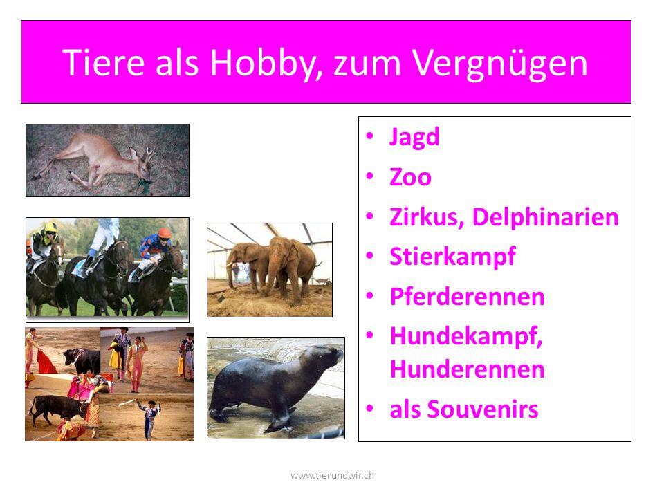 Tiere als Hobby, zum Vergnügen Jagd Zoo Zirkus, Delphinarien Stierkampf Pferderennen Hundekampf, Hunderennen als Souvenirs www.tierundwir.ch