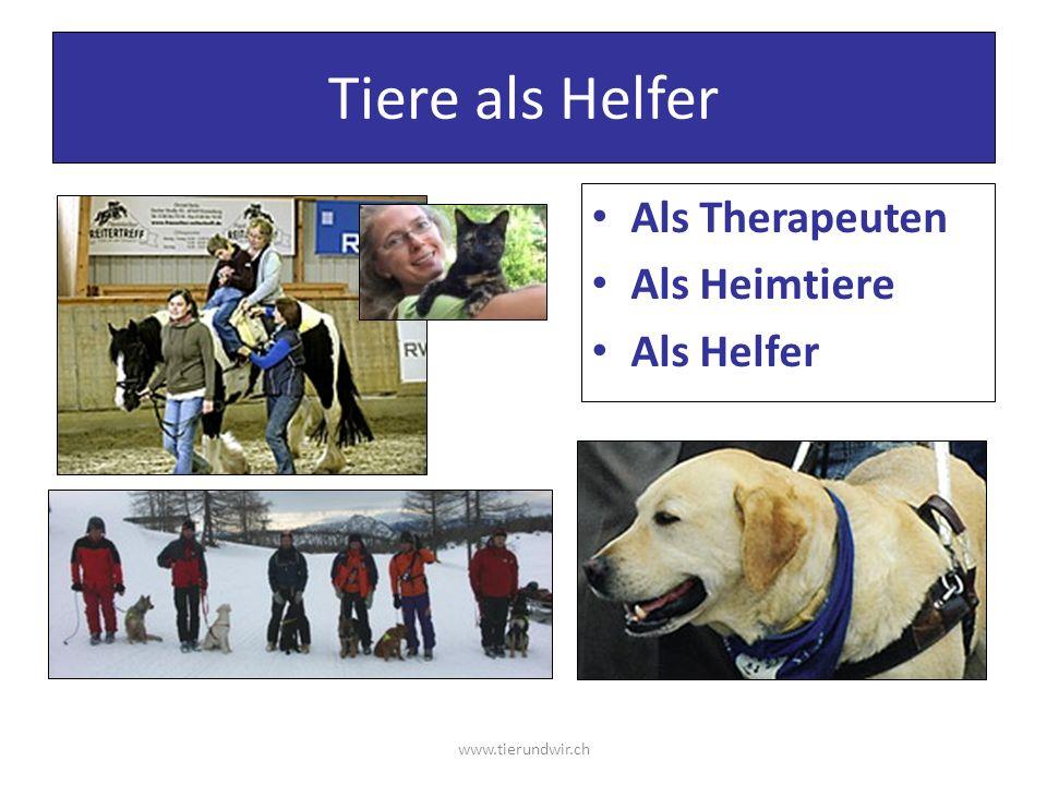 Tiere als Helfer Als Therapeuten Als Heimtiere Als Helfer www.tierundwir.ch