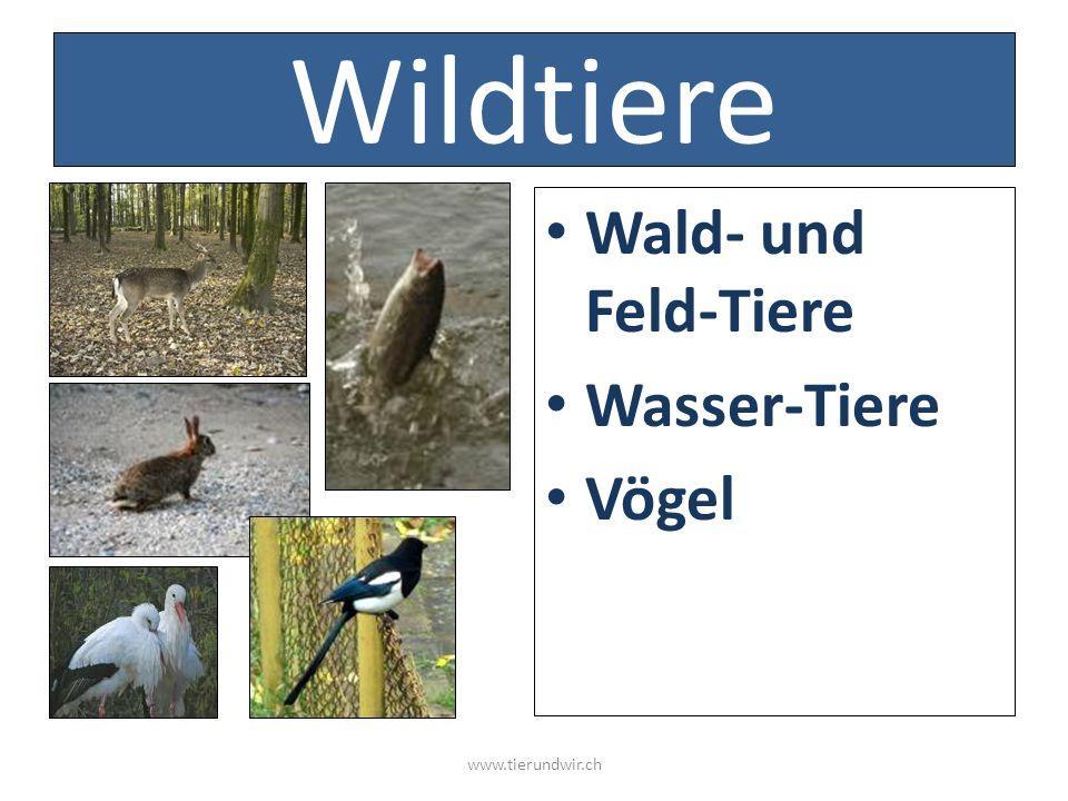 Wildtiere Wald- und Feld-Tiere Wasser-Tiere Vögel www.tierundwir.ch