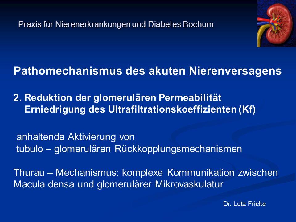 Praxis für Nierenerkrankungen und Diabetes Bochum Dr. Lutz Fricke Pathomechanismus des akuten Nierenversagens 2. Reduktion der glomerulären Permeabili