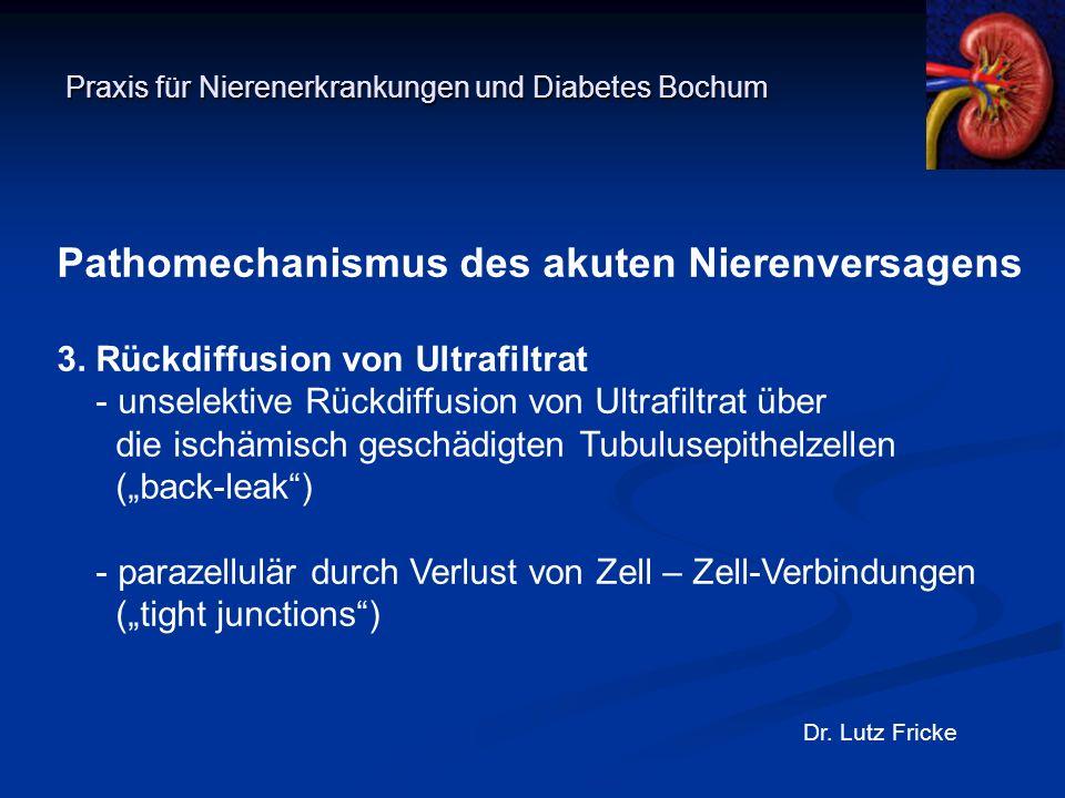 Praxis für Nierenerkrankungen und Diabetes Bochum Dr. Lutz Fricke Pathomechanismus des akuten Nierenversagens 3. Rückdiffusion von Ultrafiltrat - unse