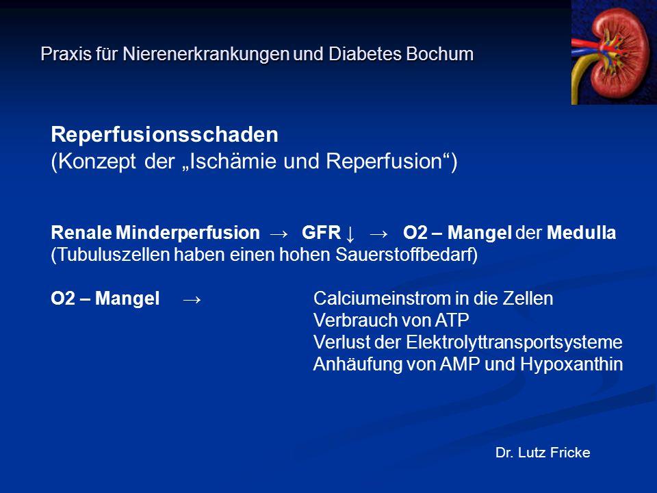 """Praxis für Nierenerkrankungen und Diabetes Bochum Dr. Lutz Fricke Reperfusionsschaden (Konzept der """"Ischämie und Reperfusion"""") Renale Minderperfusion"""