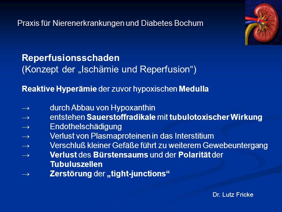 """Praxis für Nierenerkrankungen und Diabetes Bochum Dr. Lutz Fricke Reperfusionsschaden (Konzept der """"Ischämie und Reperfusion"""") Reaktive Hyperämie der"""