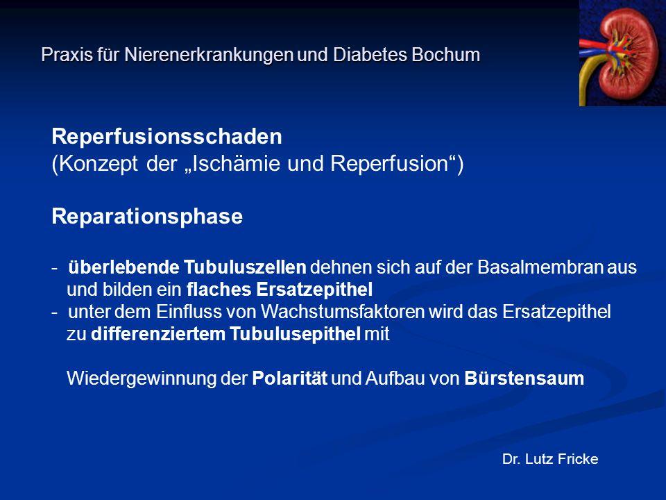 """Praxis für Nierenerkrankungen und Diabetes Bochum Dr. Lutz Fricke Reperfusionsschaden (Konzept der """"Ischämie und Reperfusion"""") Reparationsphase - über"""