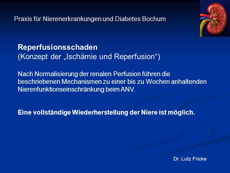"""Praxis für Nierenerkrankungen und Diabetes Bochum Dr. Lutz Fricke Reperfusionsschaden (Konzept der """"Ischämie und Reperfusion"""") Nach Normalisierung der"""