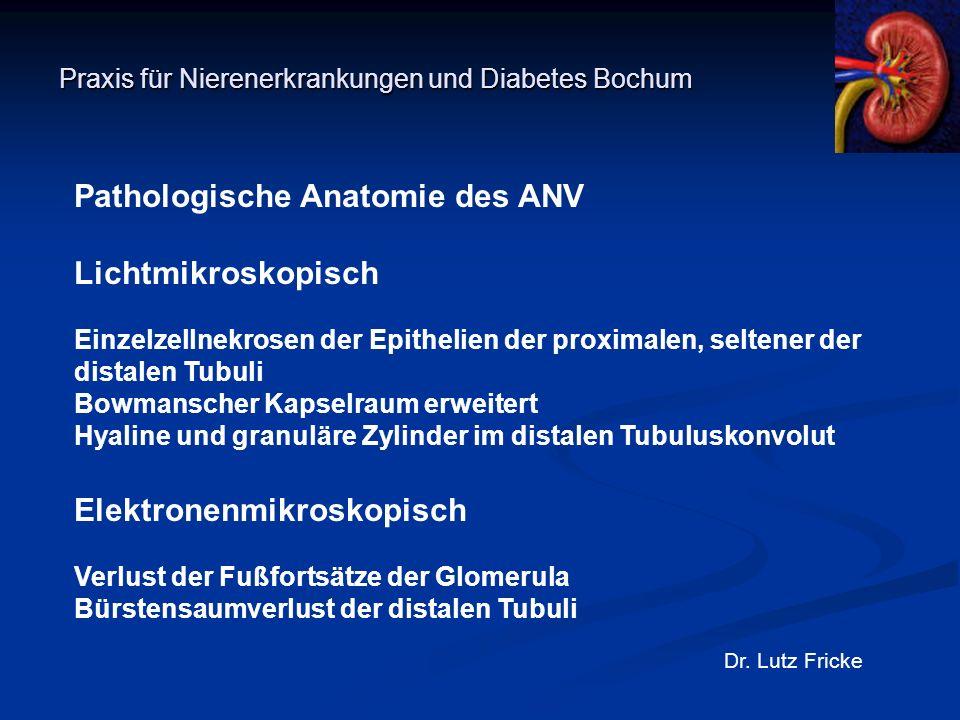 Praxis für Nierenerkrankungen und Diabetes Bochum Dr. Lutz Fricke Pathologische Anatomie des ANV Lichtmikroskopisch Einzelzellnekrosen der Epithelien