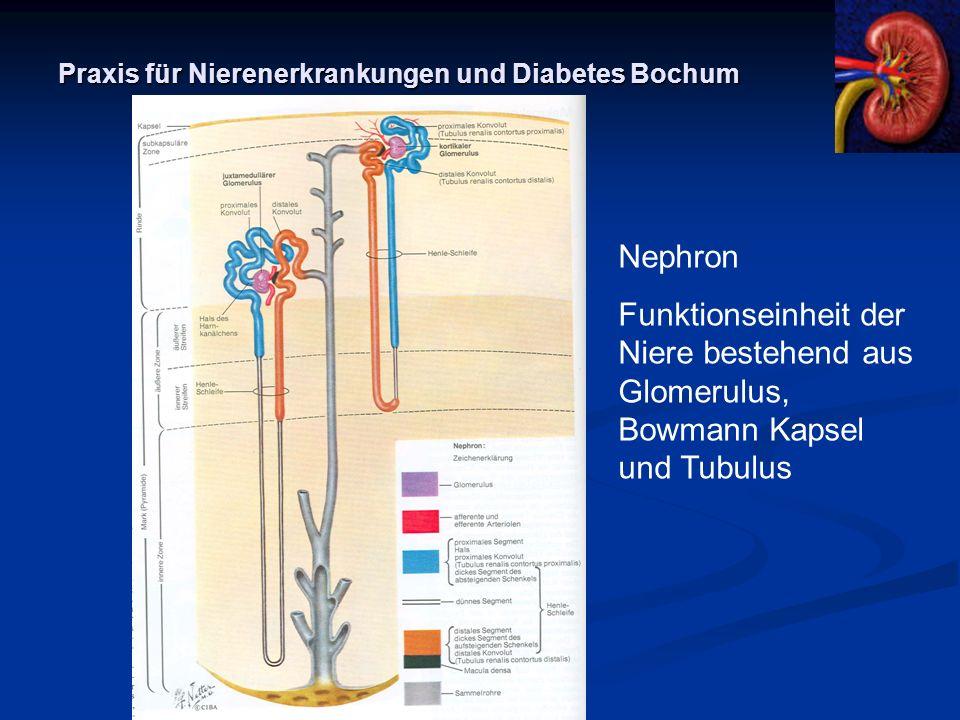 Praxis für Nierenerkrankungen und Diabetes Bochum Glomerulum 1 Vas afferens 2, 3, 6 juxtaglomerulärer Apparat, 6 Macula densa 4 Gefäßpol 5 Vas afferens 7 Kapillarschlingen 8 Bowmann Kaosel 9 Harnpol