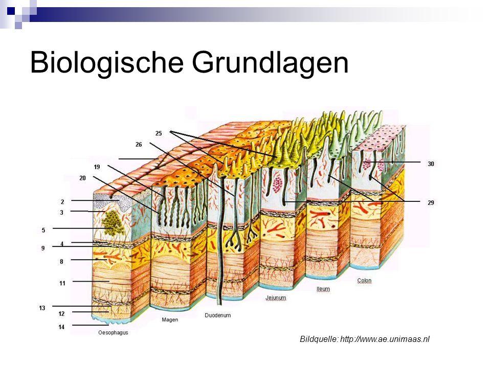 Biologische Grundlagen Bildquelle: http://www.ae.unimaas.nl