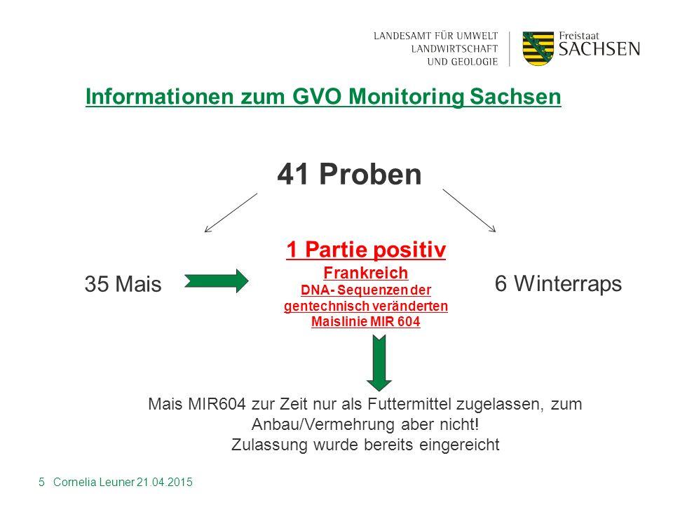5 Informationen zum GVO Monitoring Sachsen 35 Mais 1 Partie positiv Frankreich DNA- Sequenzen der gentechnisch veränderten Maislinie MIR 604 41 Proben
