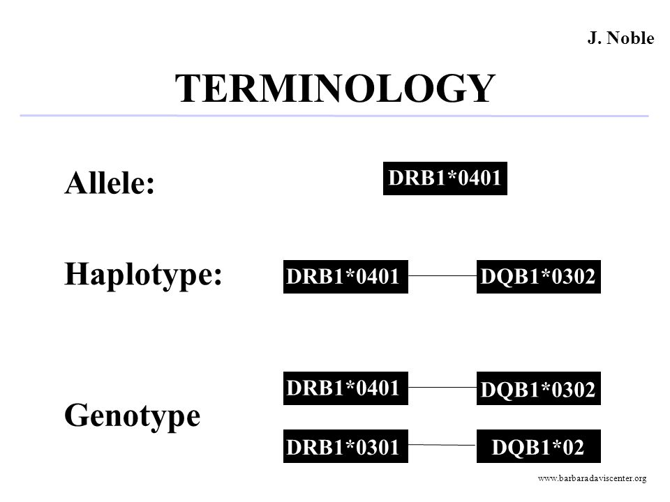 TERMINOLOGY DRB1*02 DQB1*0302DRB1*0401 DRB1*0301 DQB1*0302 DRB1*0401 DQB1*02 Allele: Haplotype: Genotype J. Noble www.barbaradaviscenter.org